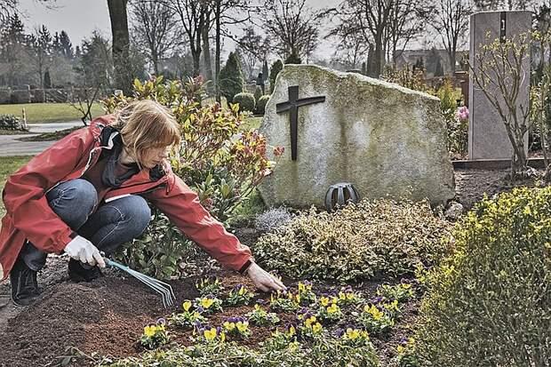 Что посадить на кладбище: неприхотливые многолетние цветы