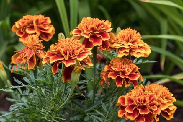 На Долгопрудной высадили цветы в клумбу по просьбам жителей