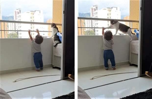 кот и ребенок на балконе