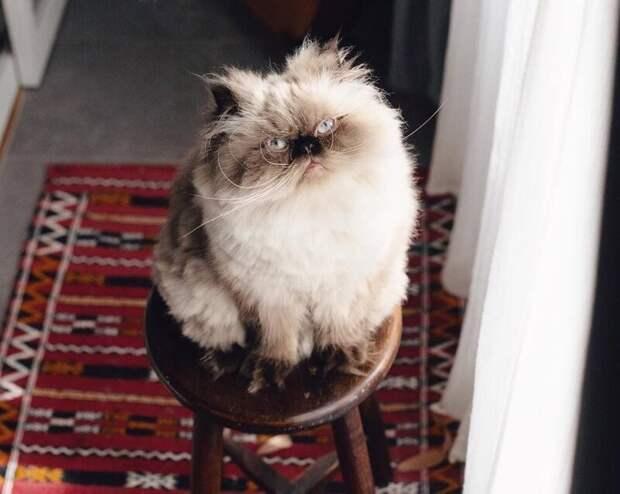 С самого рождения его мордаха излучала максимальную неудовлетворённость всем происходящим вокруг животные, кот, милота, мимика, морда, ненависть