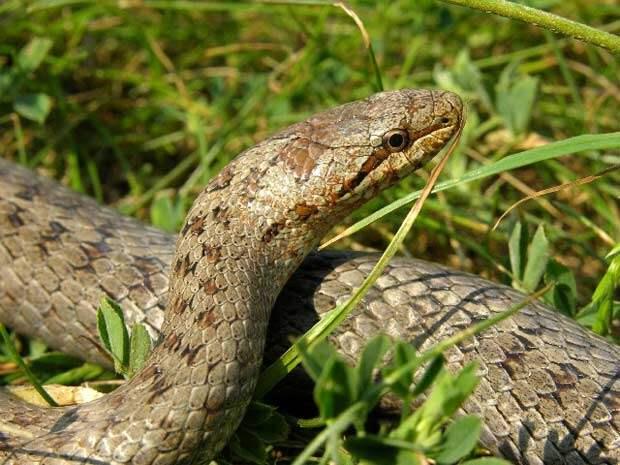 Какие растения защитят от змей на даче
