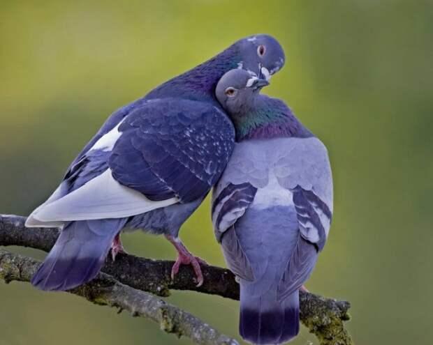 Любви все возрасты покорны и все живое на земле...