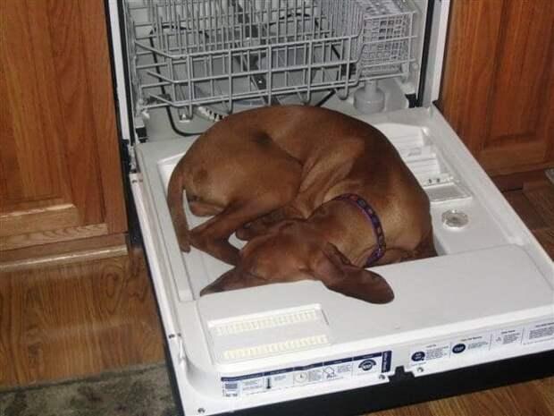 17 смешных песиков, которые так намаялись, что заснули где упали!