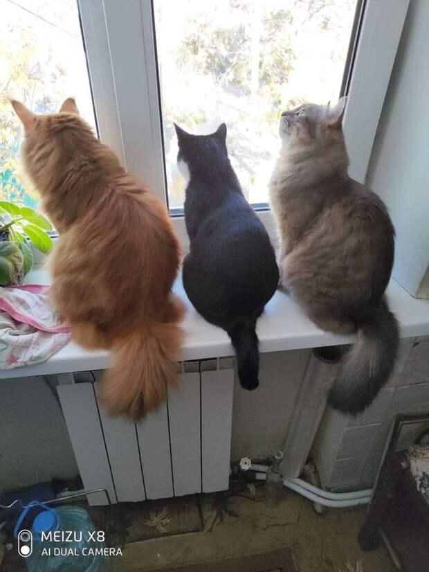 Когда можно пренебречь стрессом у кошки?