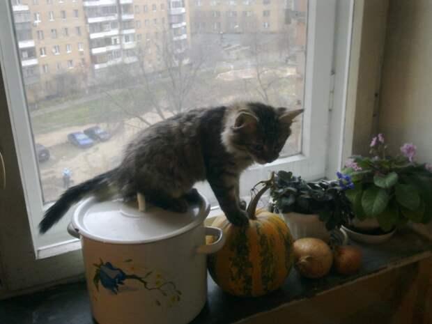 Кошки часто поедают комнатные растения