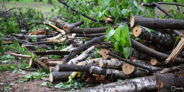 Сломанную ветку в Хорошевском проезде спилили — «Жилищник»