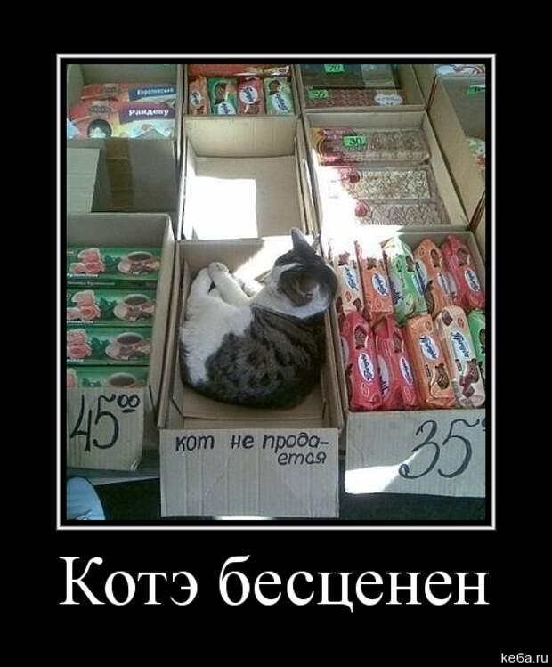 demotivator koshki 4 Демотиваторы кошки (70 фото)