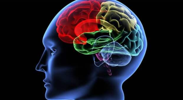 Продукт, замедляющий старение мозга