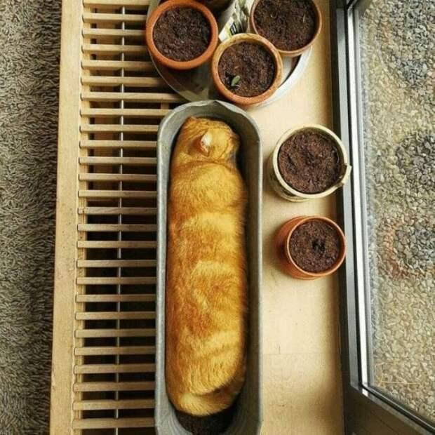Топ-10 фотографий, на которых милые коты спят в странных местах и позах