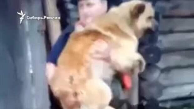 МЧС спасает собак во время наводнения в Приамурье