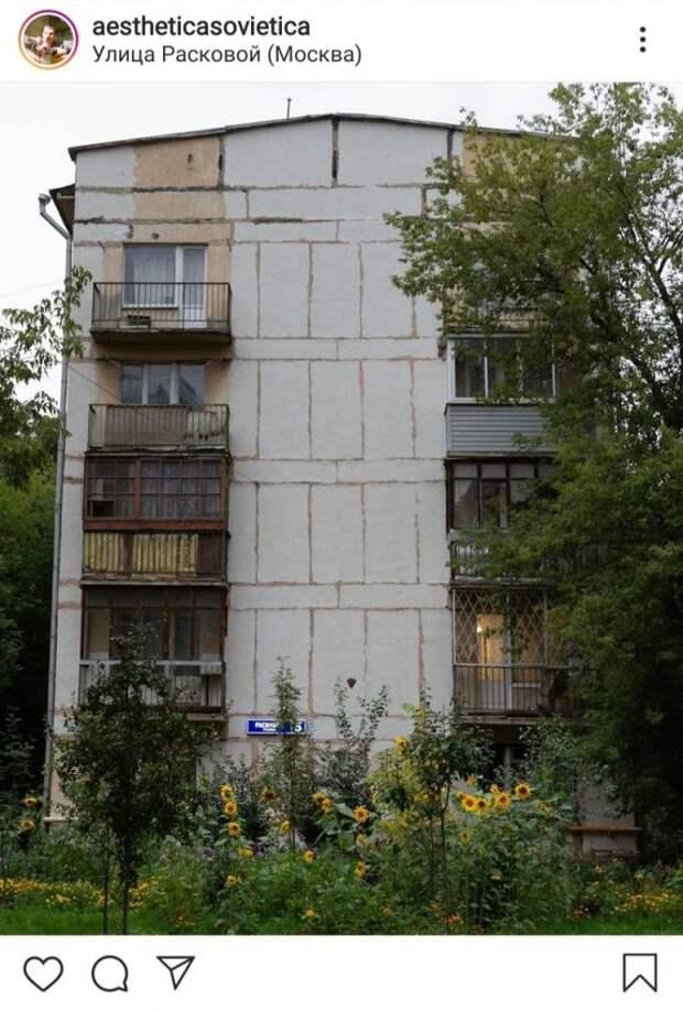 Фото дня: подсолнухи в московском дворике