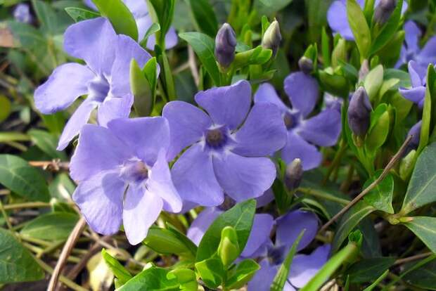 7 многолетних растений для сухого тенистого сада