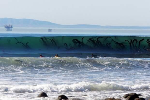 3. Водоросли в море животные, мир, подборка, природа, ужас, фото, явление