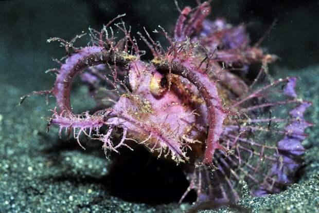 prichudlivieribi 1 10 самых причудливых рыб мирового океана