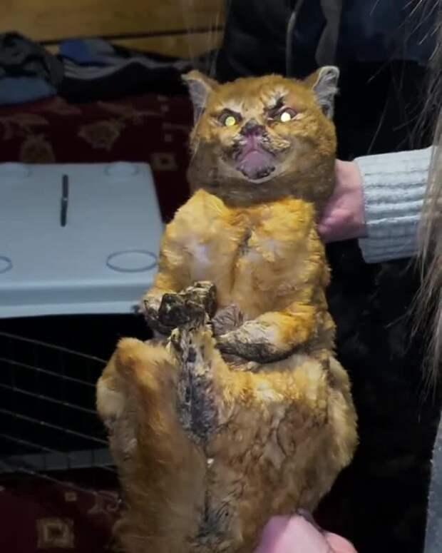В Татарстане работник пилорамы бросил живую кошку в печь – она мешала ему пить