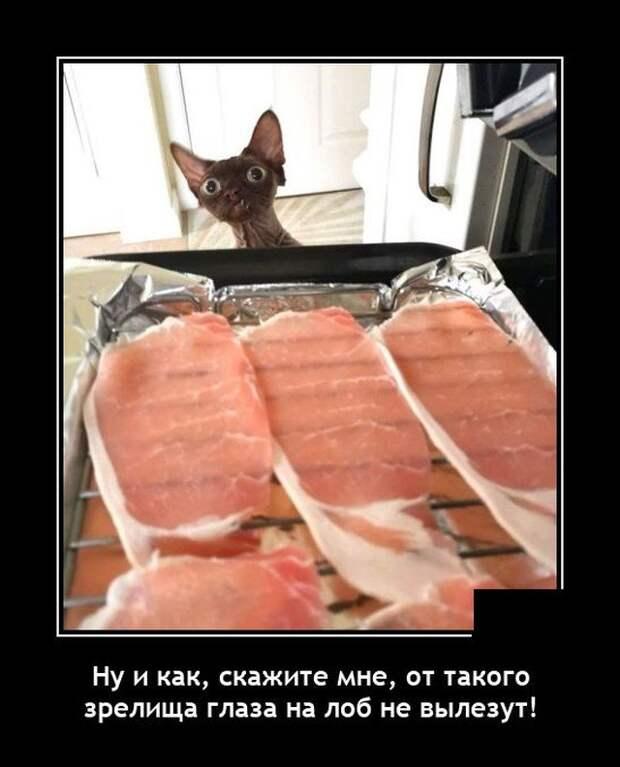 Демотиватор про кота и еду