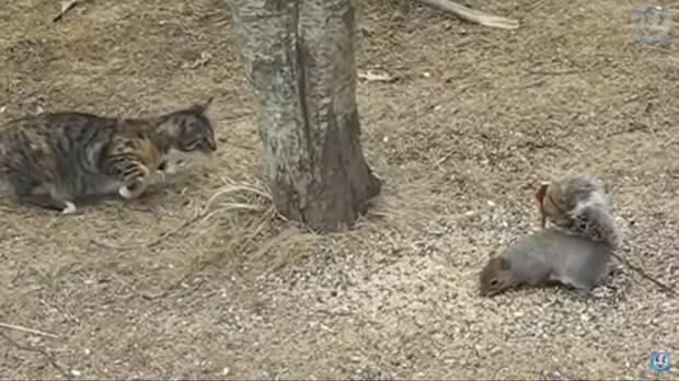 Видео: Белки троллят котов и крадут еду у птиц
