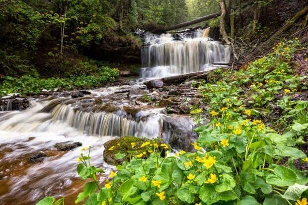 Калужница болотная у водопада