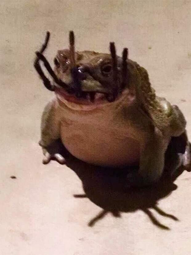 18. Лягушка поймала паука животные, мир, подборка, природа, ужас, фото, явление