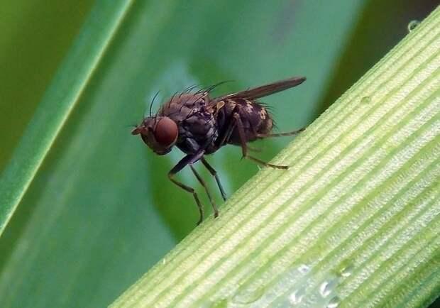Простые и безопасные народные средства, которые помогут при укусе насекомых