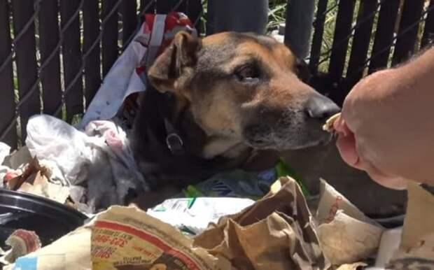 Собака нюхает еду