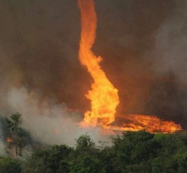 После него только пепел — как образуется фатальный для всего живого огненный торнадо