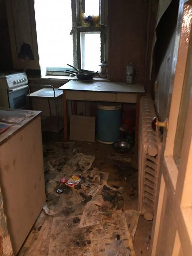 В Якутске волонтеры спасли двух собак, запертых в заброшенной квартире