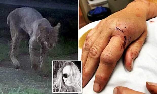 Американская бабушка голыми руками задушила напавшую на нее бешеную рысь