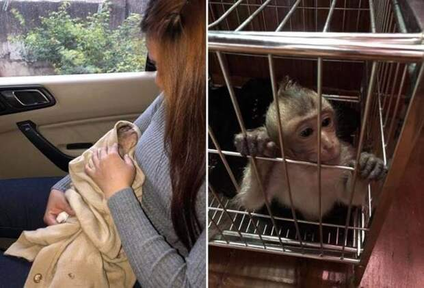 В Таиланде обезьянка уснула на 10 часов после того, как выпила немного кофе в мире, животные, кофе, обезьяна, сон