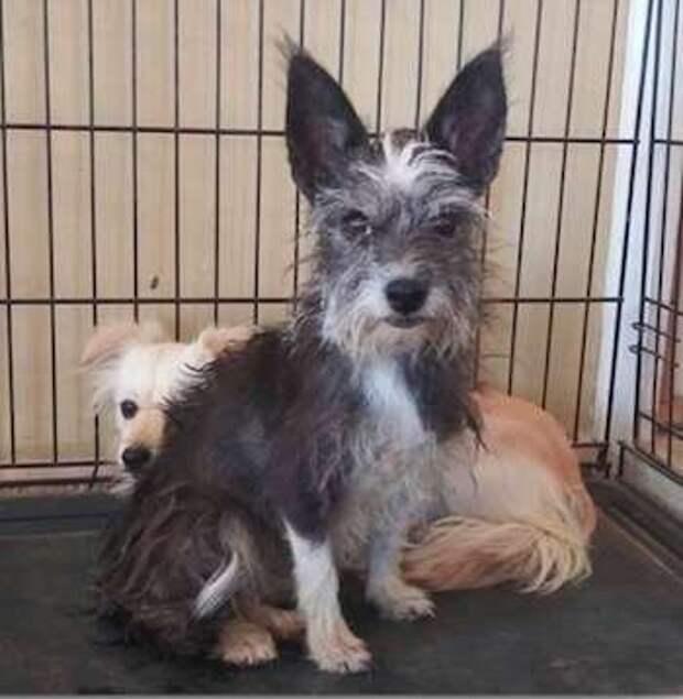 две собаки в клетке