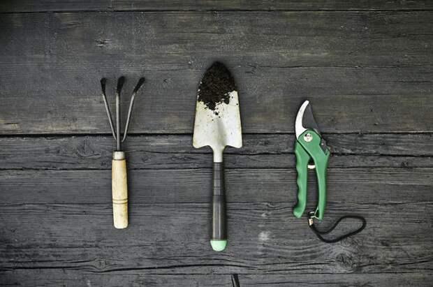 Как подготовить почву для посадки - пять советов для лучшей почвы