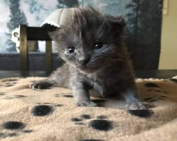 История котенка с милым хохолком на голове