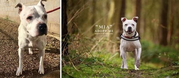 15. Миа животные, помощь, портрет, приют, собака, фотограф, хозяин
