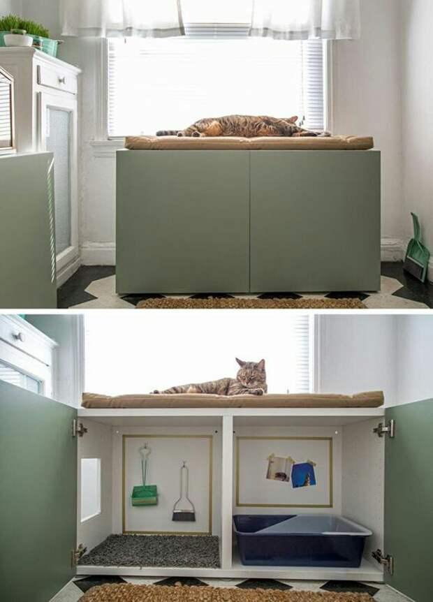 Продуманные туалеты котов (подборка)