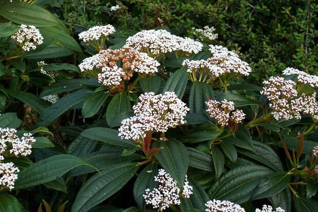 Вечнозелёные растения для красивого участка