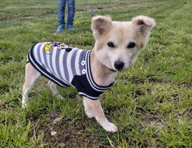 После купания и стрижки, маленькая собачка, которая жила на улице преобразилась и нашла дом