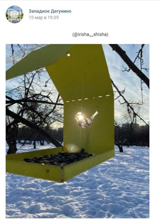 Фото дня: «волшебная» кормушка в парке «Ангарские пруды»