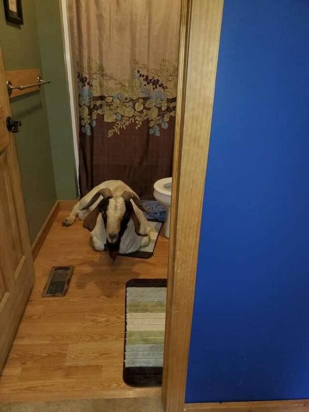 Вернувшись из школы, мальчик увидел, что окно в дом разбито. Войдя внутрь, он нашёл в ванной спящее животное и испугался