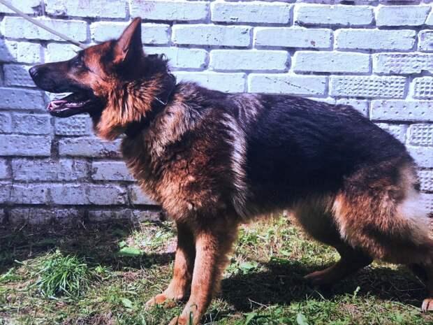 УФСИН Удмуртии ищет новый дом для своих собак-ветеранов, уходящих на заслуженный отдых