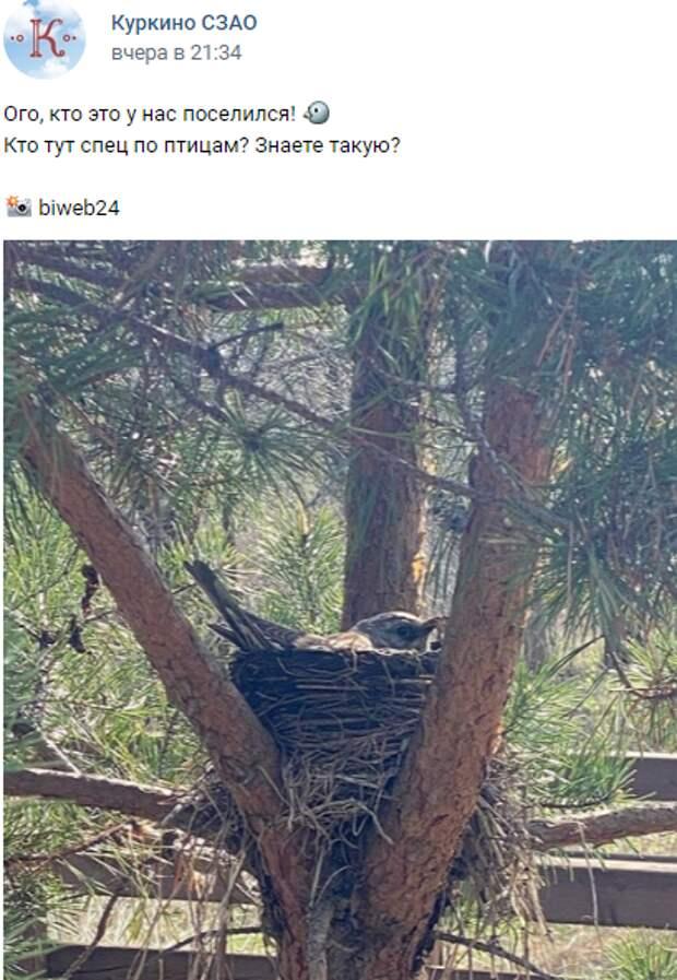 Фото дня: дрозд-рябинник взял под контроль «квартирный» вопрос