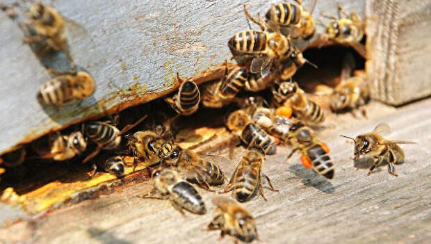 Учёные выяснили, что пчёлы умеют учиться на чужих ошибках