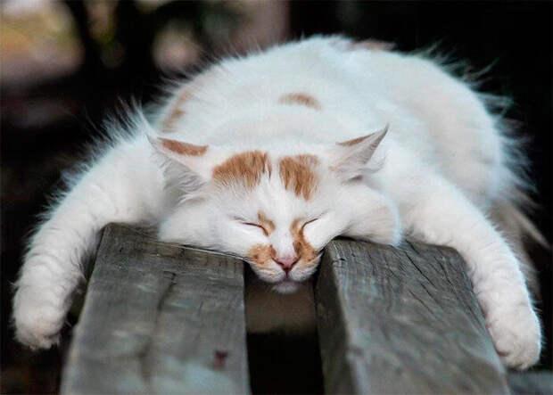 Это кото-терапия, а именно подборка фотографий спящих котов.