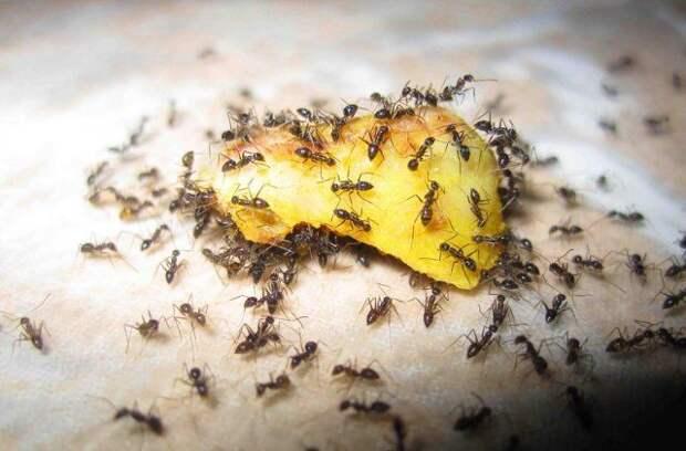приманка для муравьев