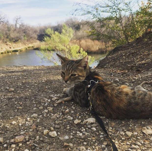 Пара осталась в Мексике на год, потому что они не смогли оставить спасенную кошку