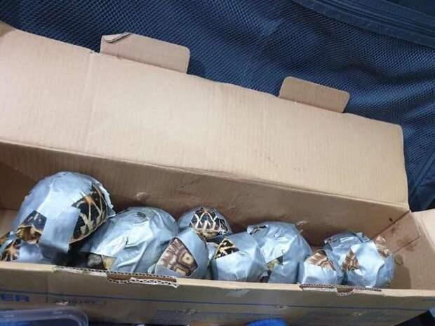 черепахи в коробке
