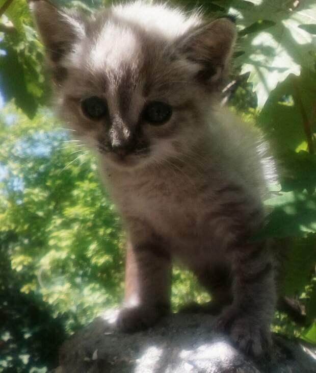 А ко мне вчера пришло вот такое чудо котёнок, откуда, чудо
