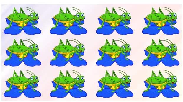 Тест на внимательность: найдите за 30 секунд чем отличается на картинке веселый кузнечик от своих сородичей
