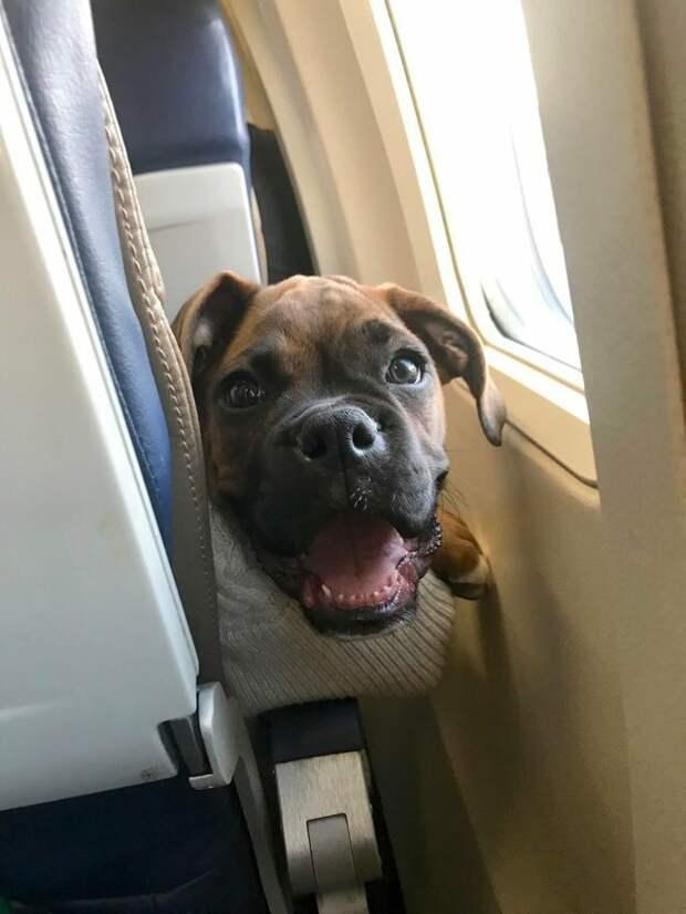 6. Крайне любопытны животные, пассажир, салон, самолет, собака, фотография