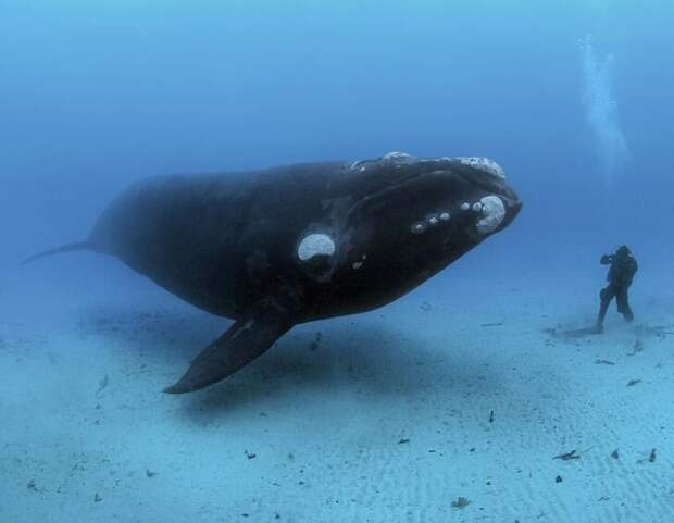 Brian Skerry / National Geographic