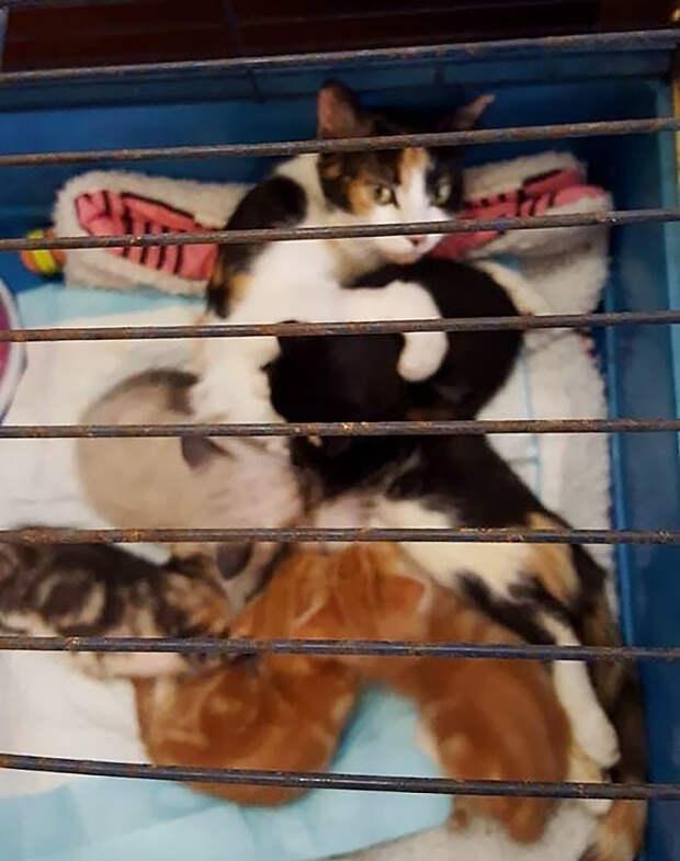 Парализованная кошка доползла до места, где оставила котят, после того, как человек пытался ее убить